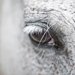 Animals photography - AWT-Fotografie